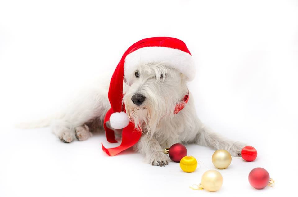 Z nami zrobisz najlepsze świąteczne zakupy!