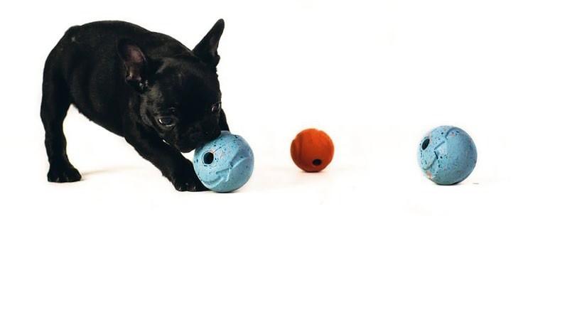 Alternatywne sposoby pracy z psem lękliwym