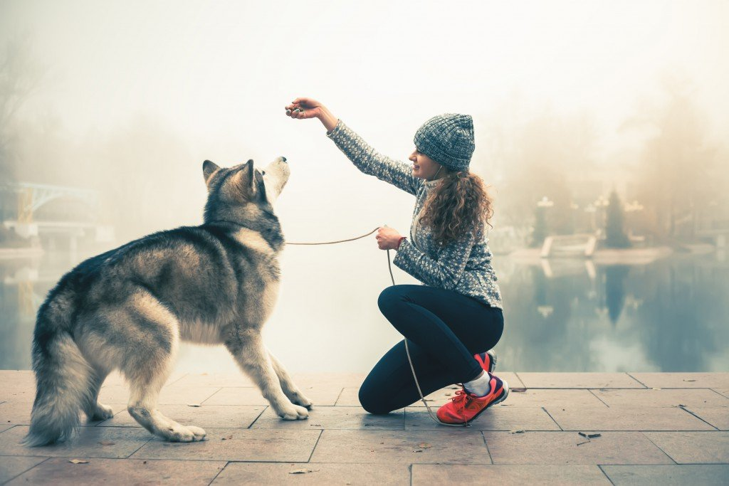 Zapisz się już dziś ! Ogólnopolska Konferencja - Zachowanie, zdrowie i żywienie psa