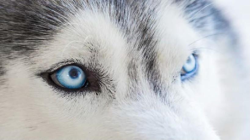 Tajemnice psiego oka